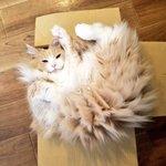 実は電気タイプのポケモンだった!?静電気を溜めた猫が面白い!