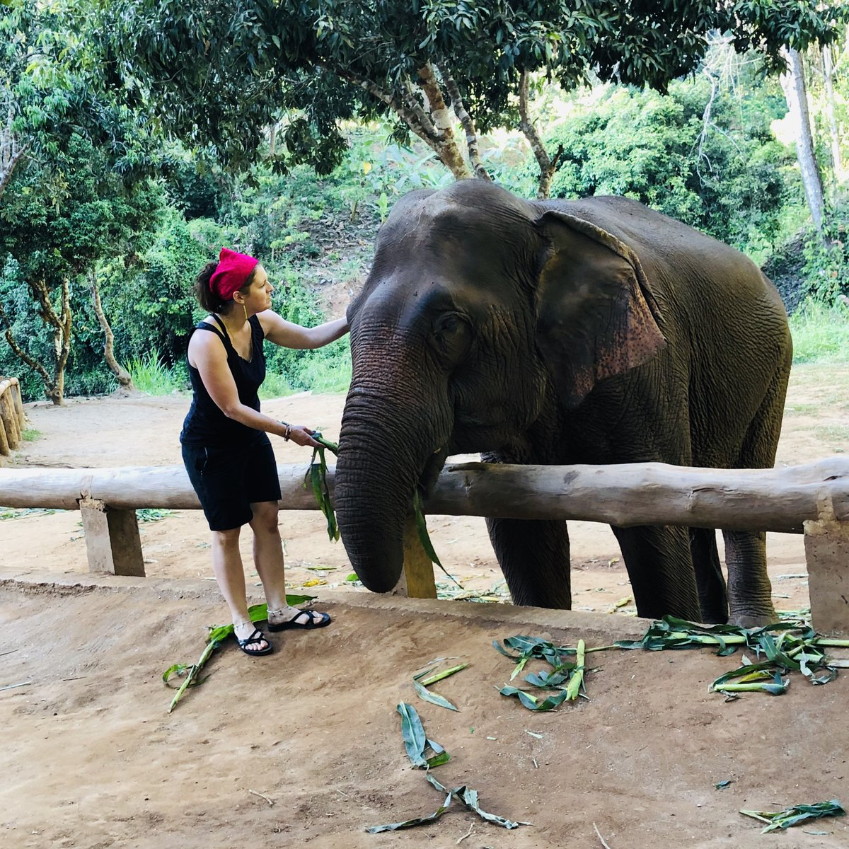 A year ago today, we visited the Toto Elephant Sanctuary in Chiang Mai, Thailand.   Learn more about this incredible experience in Episode 10 - Thailand for Indian Travelers- link in profile   #elephantsanctuary #podcast #indianpodcast #indianblogger #indiantravelpic.twitter.com/lrMAKLlSLP