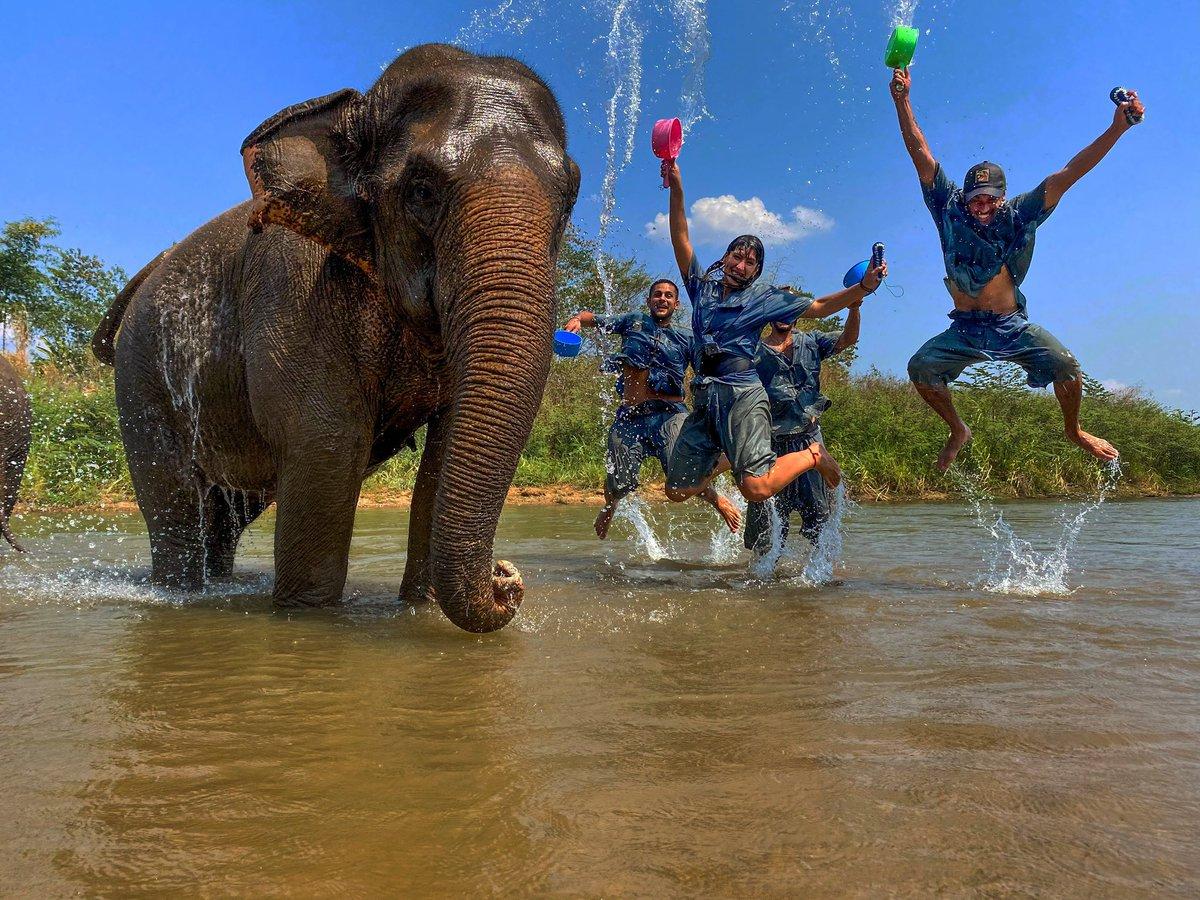 #thailand #chiangmai #elephant #elephantjunglesanctuary #travel #elephants #elephantsanctuary #travelgram #travelphotography #nature #wanderlust #instatravel #love #jungle #asia #travelblogger #sanctuary #amazingthailand #tailandia #southeastasia #photography #trip #animalpic.twitter.com/lpazqNCnjs