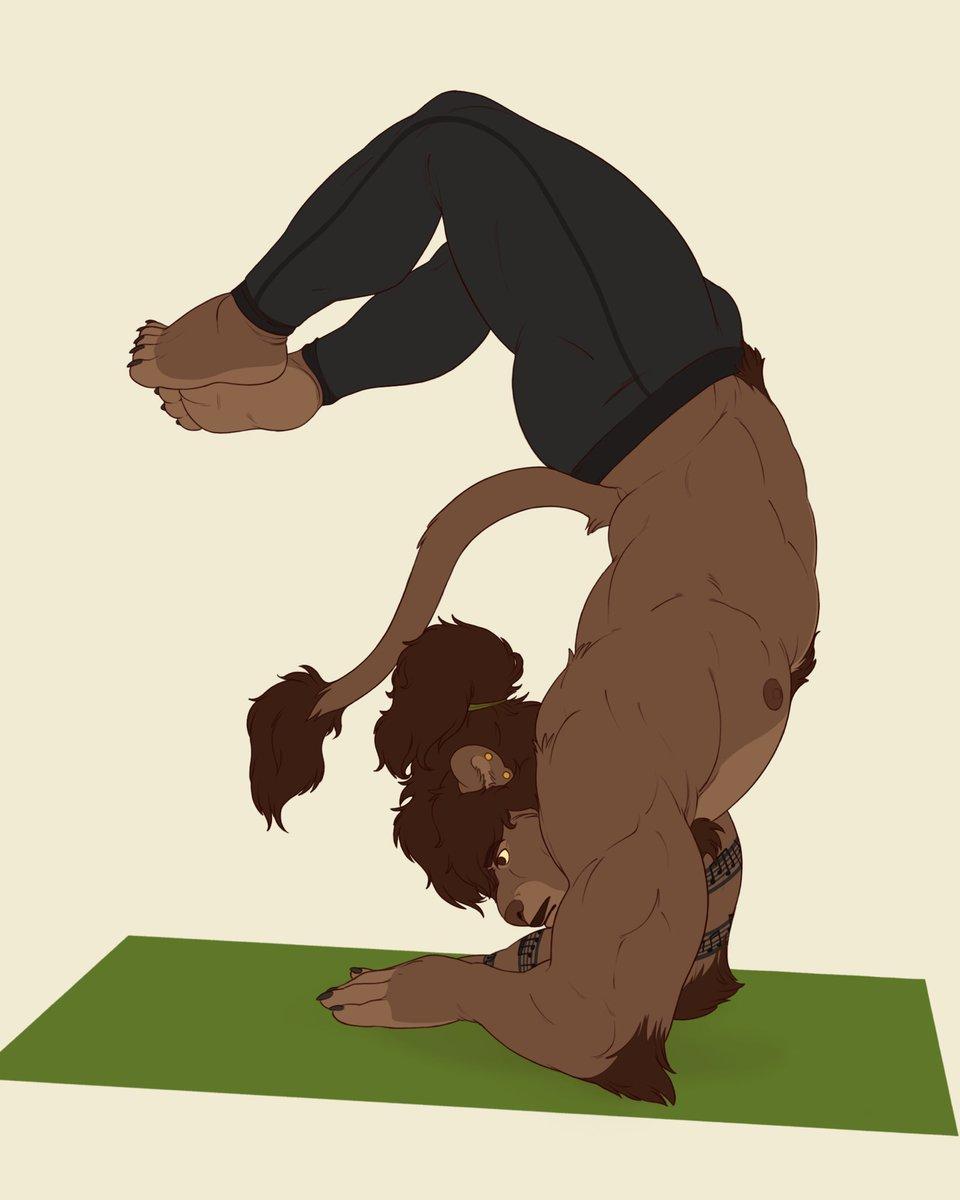 Flexibility + yoga + big cats = win