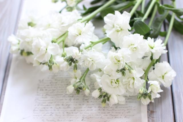 【お花屋さんの切花図鑑】  ●ストック  花束にもアレンジにも重宝する春の花。  白、ピンク、濃いピンク、淡い紫、濃い紫、クリーム色など色も豊富。  まっすぐ咲くタイプと、枝分かれして咲くタイプがあります。  #切花図鑑 https://t.co/2zU73nc9ie