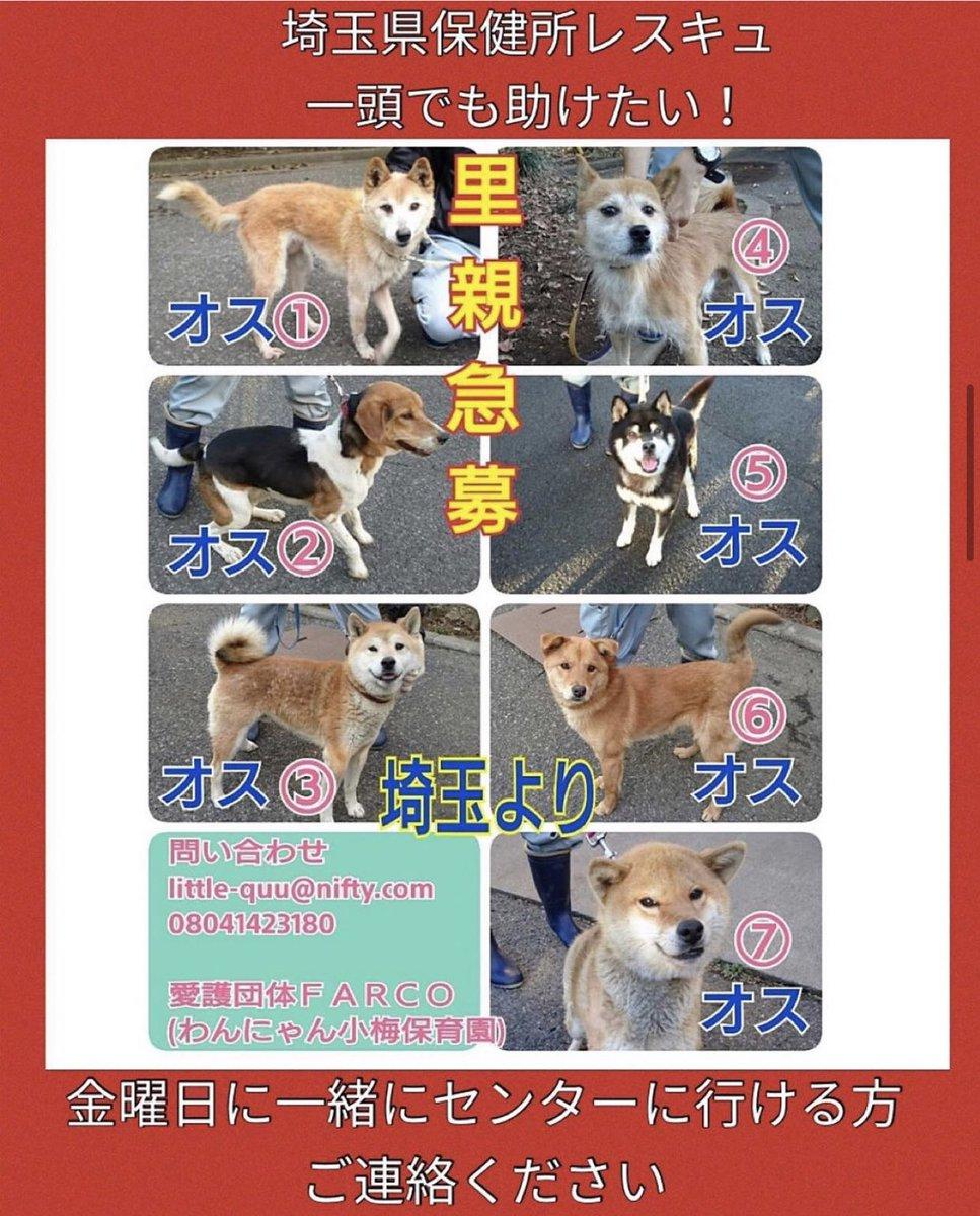 県 犬 埼玉 保健所