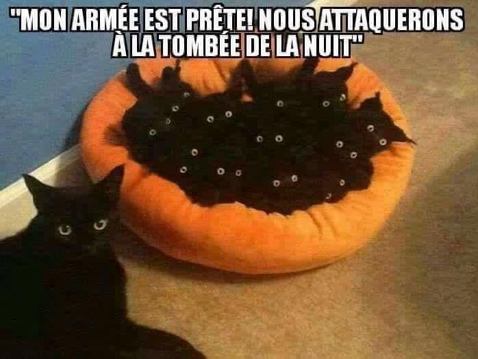 Une vraie armée de petits démons 😻💕💕 #animaux #chat #potichat