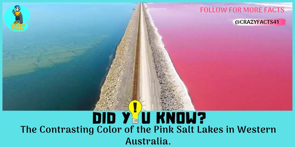 Contrasting ... If You Like This Post Then Follow us   @CrazyFacts41  #contrastingcolors #contrasting #contrastingcolours #contrastingtextures #pinksaltlake #pinksaltlakes #westernaustralia #visitwesternaustralia #explorewesternaustralia #perthwesternaustralia https://t.co/EAGIXigAlH
