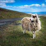 Image for the Tweet beginning: Faroe Islands: Unlike Anywhere Else