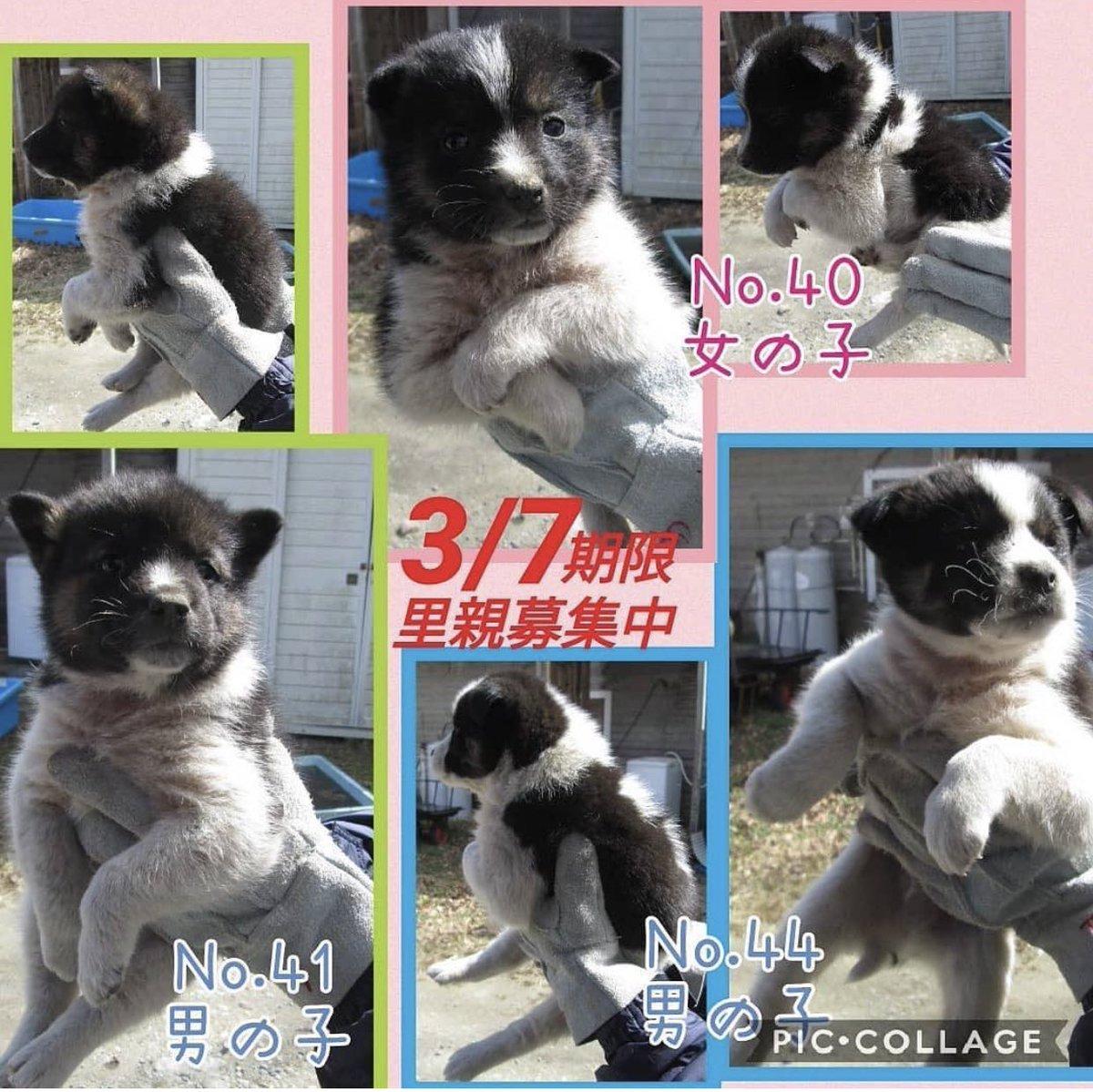 子犬 譲り ます 無料 沖縄