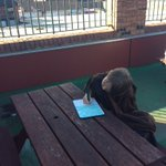 Image for the Tweet beginning: Year 6 writing songs on