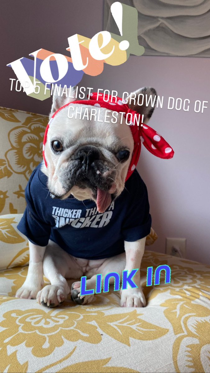Luna Bean is a top 5 finalist in the Crown Dog of Charleston contest! Please vote every 24 hours until March 15! Link in profile! Please RT! https://t.co/3zH0udxfqD