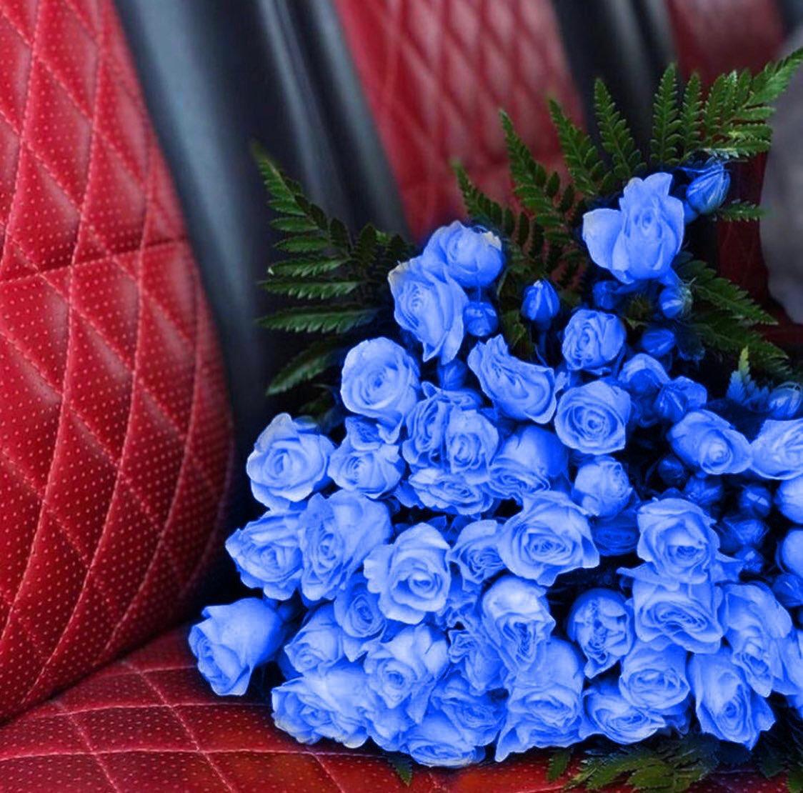 أزرق Blue On Twitter نفسيتي تحتاج باقة ورد لونها أزرق