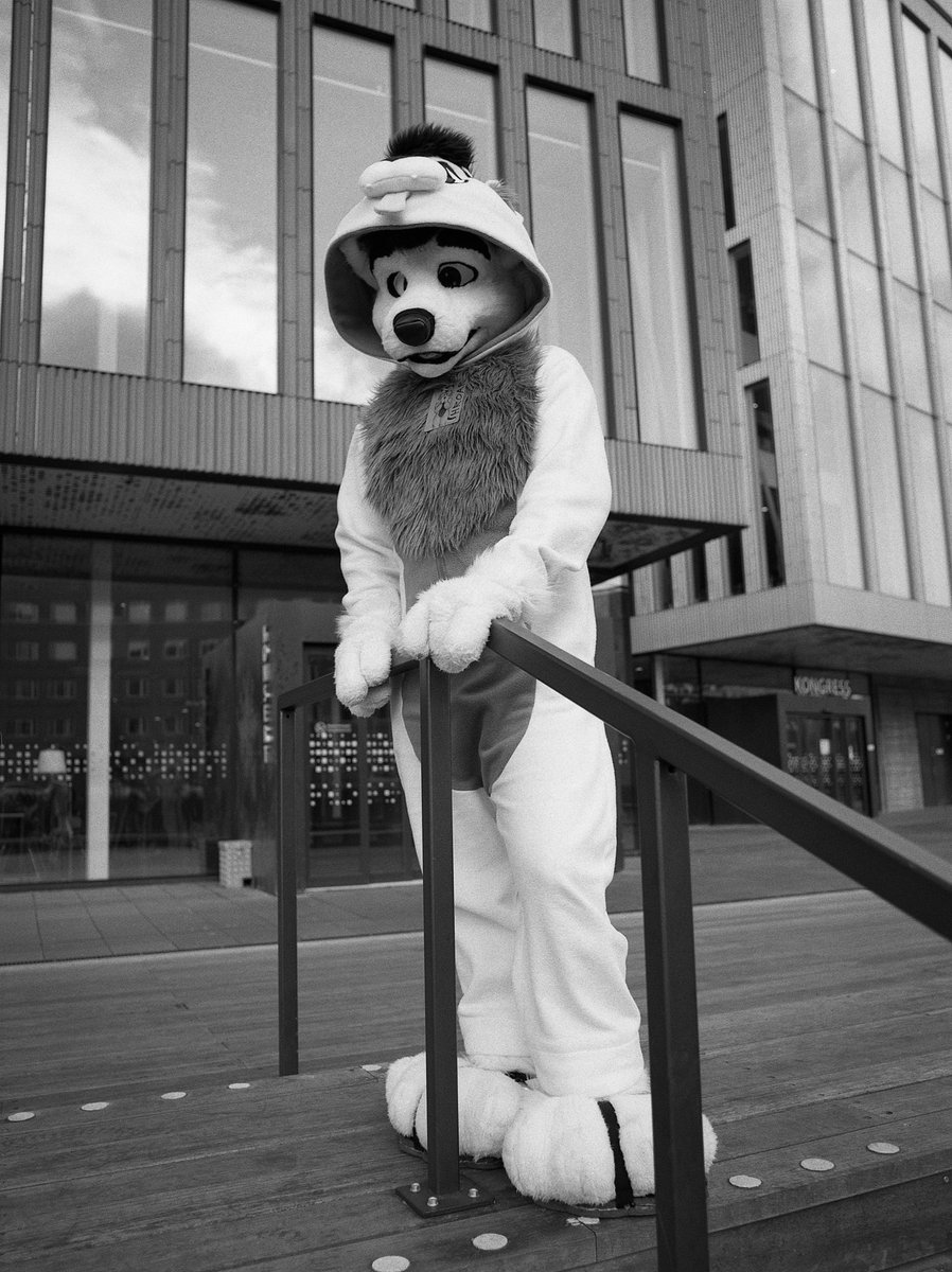 Away from home once again. Pic from @NordicFuzzCon, by the lovely @MittFox.  #FursuitFriday<br>http://pic.twitter.com/hfONZPe7ay