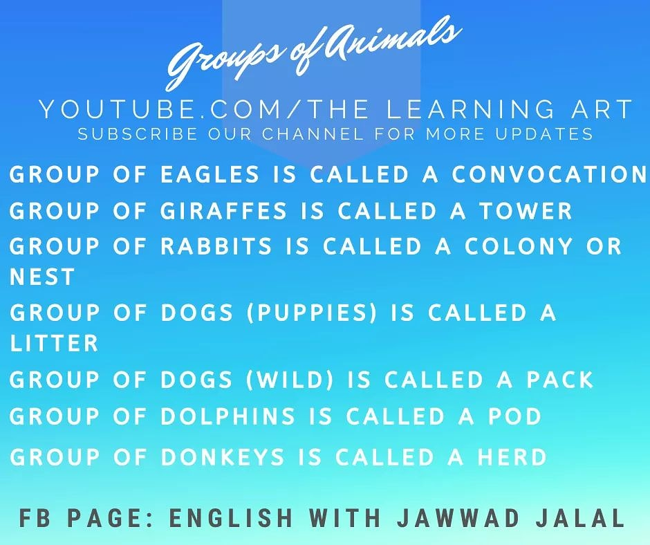 Groups of Animals in English Language #GroupsofAnimals #ImportantInformation #EnglishwithJawwadJalal #TheLearningArt #TheJawwadJalal #EnglishLanguage #EnglishGrammar #EnglishLearning #OnlineEnglishClassespic.twitter.com/TGzKnAApFr