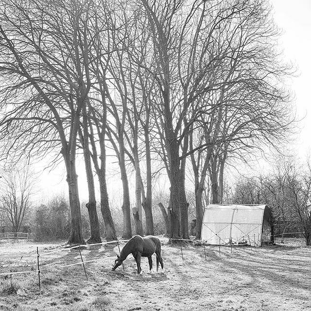 #blackandwhite #blackandwhitephotography #biancoeneroitalia #biancoenero #bn #bnw #bw #horse #bareggio #shotoniphone #shotoniphone11pro https://ift.tt/2uZ6Dfupic.twitter.com/CkhitanWiO