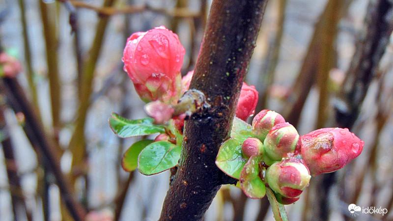 🌤Délután keleten is eláll az eső, tavaszias idővel folytatódik a hétvége.🌸  Fotók: Naiad87, Bollók Magdolna, Pál Krisztina