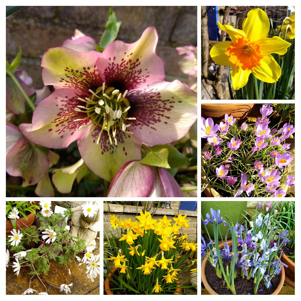 @cavershamjj Another dose of Spring for this week's #sixonsaturday 👍☀️💃
