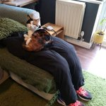「フェイク膝」を作れば猫を長時間膝に乗せる事なく作業に集中出来ると話題