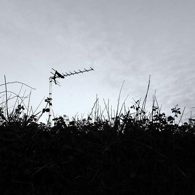 A more common sight over the top of hedgerows. . #aerial #winterwalks #silhouettes #hedgerow #monochrome #wintersun #blackandwhitephotography #everydayphotography #streetphotography #highcontrast #teignmouth #southwest #devon #walkswithmorty #x100f https://ift.tt/2wzK6X7pic.twitter.com/1hLcJ5TjkV
