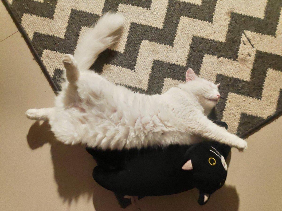 untuk saleptuit/rangbiasa/ibuibumuda/karyawan yang pengen meliara kucing tanpa harus keluar duit, coba kliling komplek deh.. cari kucing jalanan..  btw yang di bawah dipungut dari skolahan SD.. Korban bully juga kayanya pic.twitter.com/iDQiKy2NOr