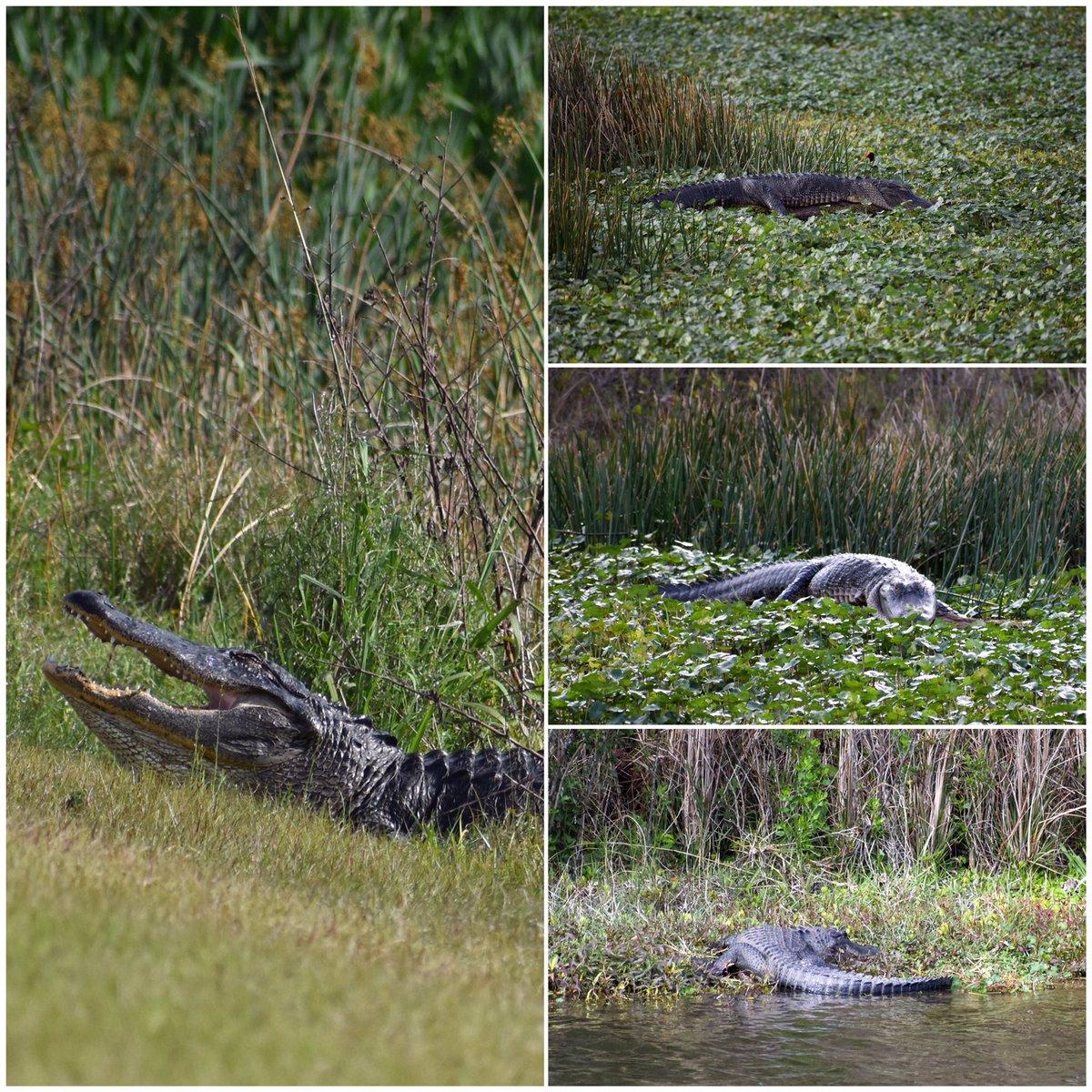 Gators back from Spring Break?