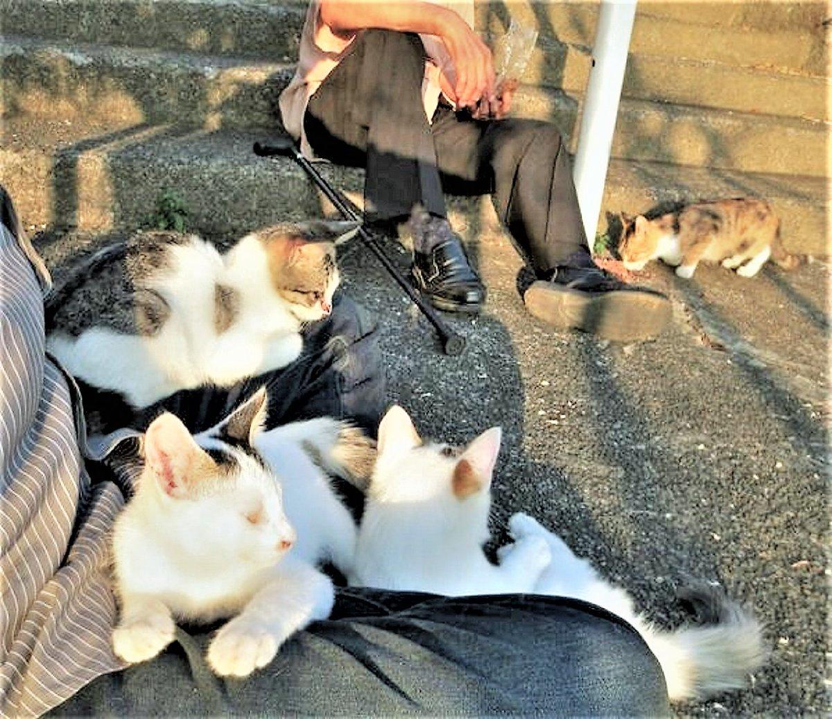 おはよ~ ございます ★╦╦╔╗╔╗╔╗╗╔░╔╦╗╔╗╔╗─╦╔╗╗╔★  ★╠╣╠╣╠╝╠╝╚╣░║║║║║║║╔╣╠╣╚╣★ ★╩╩╩╩╩─╩─╚╝░╝╝╝╚╝╩║╚╝╩║═╝★  #cat #ねこ #猫 #地域猫 #東京探検隊 pic.twitter.com/Mv4W6b7HjK