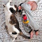 赤ちゃんと飼猫のシンクロ率が凄すぎると話題の画像!かわいい~~~~~!