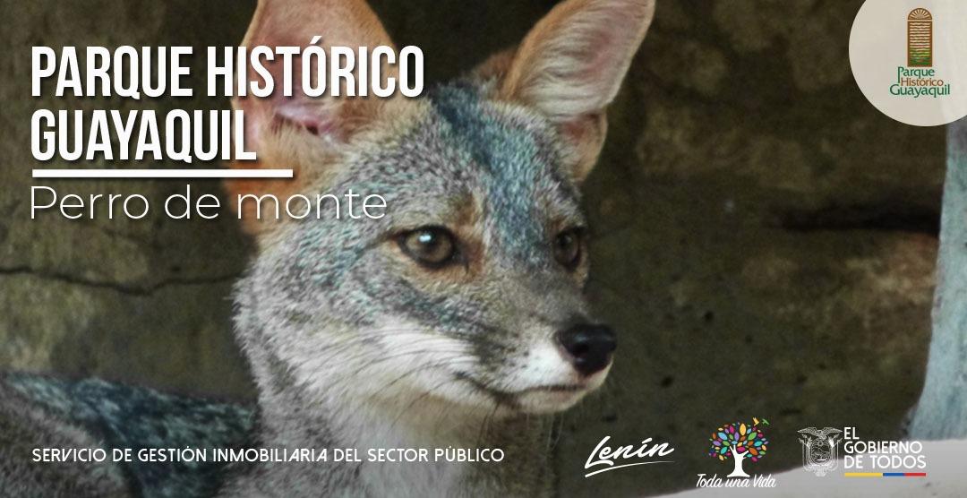 La vida silvestre del Ecuador es muy variada, ven y conoce varias las especies que habitan en el #ParqueHistóricoGye. Visítanos de miércoles a domingo desde las 09H00 hasta las 16H30. https://t.co/RkrmwvZ4JV