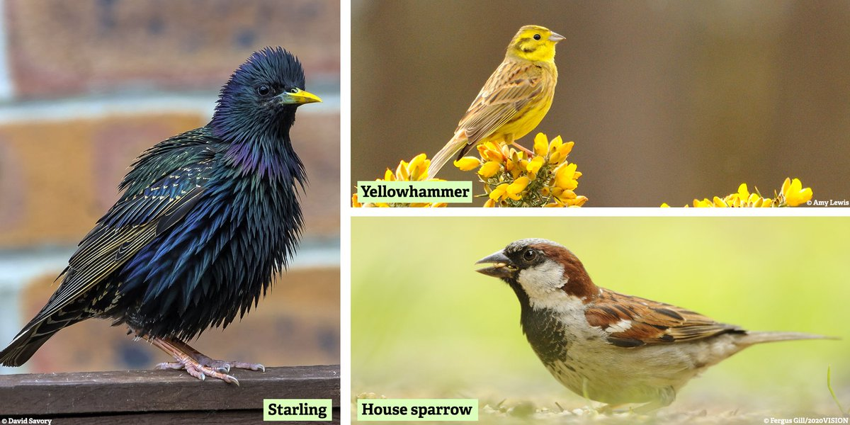 Have you spotted a starling, house sparrow or yellowhammer? 🐦 Were looking for records of these three species across the county for our spring spotter survey 🌼 Submit your sightings: nwtru.st/spotter 📝