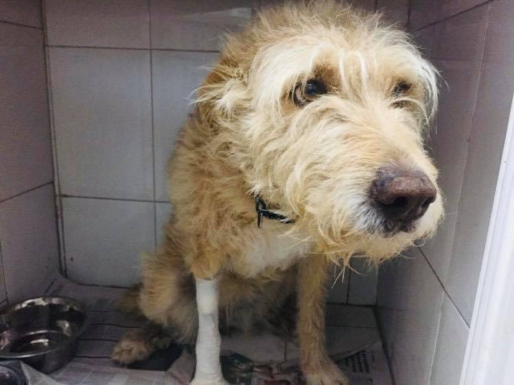We rescued Fluffypot on Saturday just in time. Covered in faeces & what seemed like oil, turns out she had eaten poison & was really unwell, maybe that's why she let herself be caught so easily. Now on a drip & meds & we hope she will come thru it🙏Thank you for your support ❤️