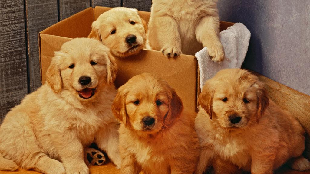 It's been kind of a bad news day. So let's make it #surprisinglypainless. Cue puppies.