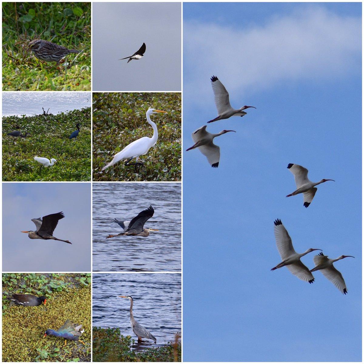 Birding at Sweetwater Wetlands park.