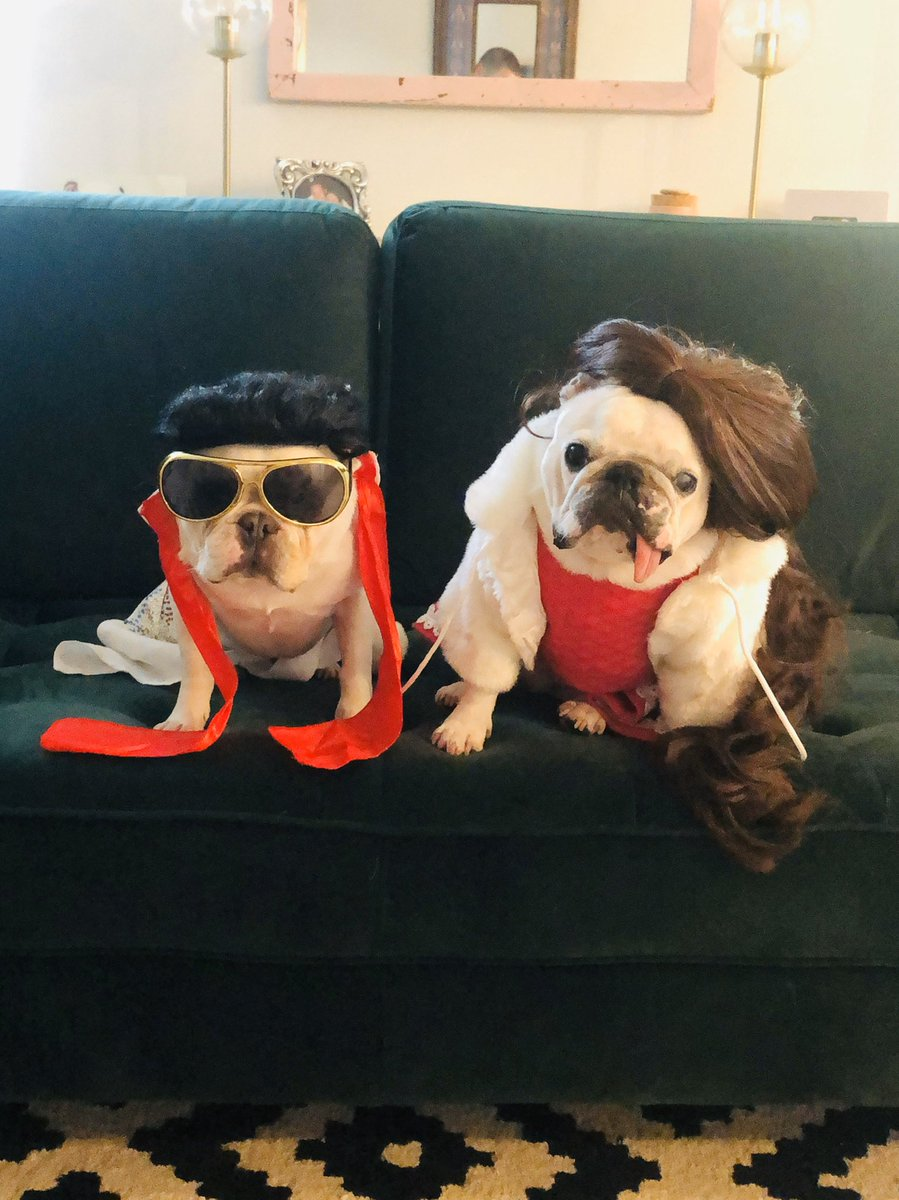Elvis says to be sure to take care of business today and vote for Luna Bean (aka Priscilla) for Crown Dog of Charleston! You can vote every 24 hours until March 15th! Link in bio.  #crowndogofcharleston #elvis #priscillapresley #memphis #charleston #frenchiesofinstagram https://t.co/hFB1IlRQSE
