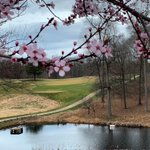 Image for the Tweet beginning: Spring has sprung! 🌸 #tpcpotomac #playtpc
