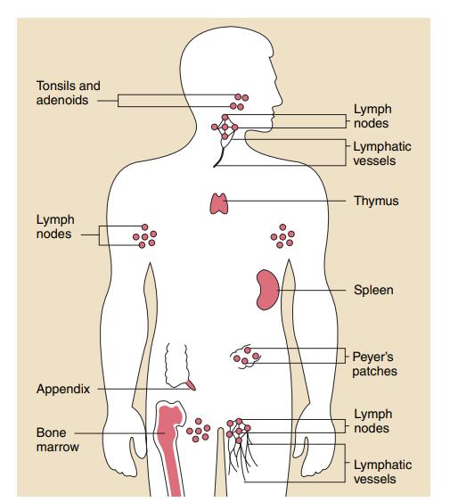 ¿Cómo funcionan las vacunas? ¿Cuáles son los pasos para desarrollarlas?