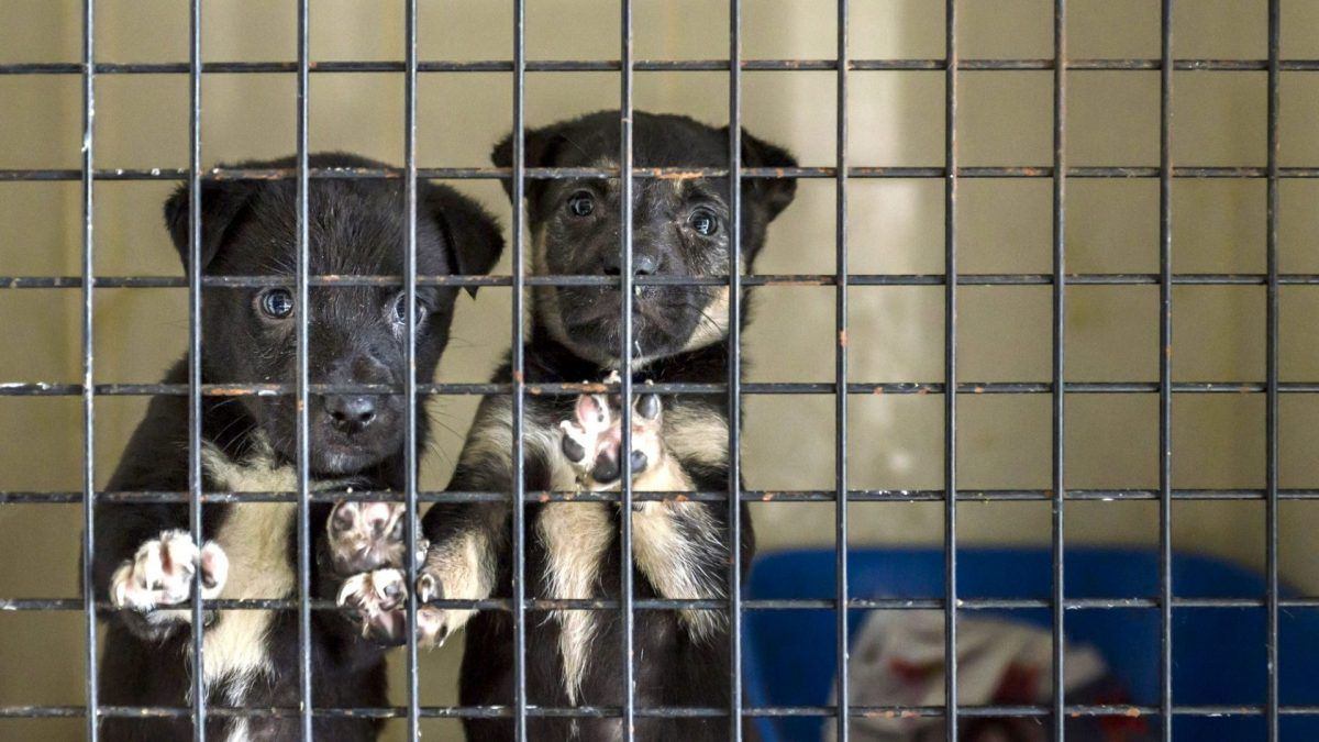 🚨 New Hampshire: Help fight #puppymills by urging your state legislators to support the Puppy Mill Bill (HB 1388)!  #animalrights