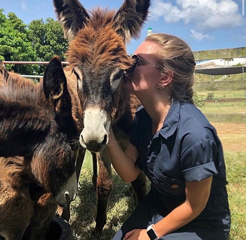 #CampusSpotlight: Rossie, Gretchen Yinger showing love to our donkeys on campus! Spending time with animals on campus is always worth it if you ask us! #RossVetLife #Vetlikeagirl #VetMedGirlpic.twitter.com/kPDZeZz45D