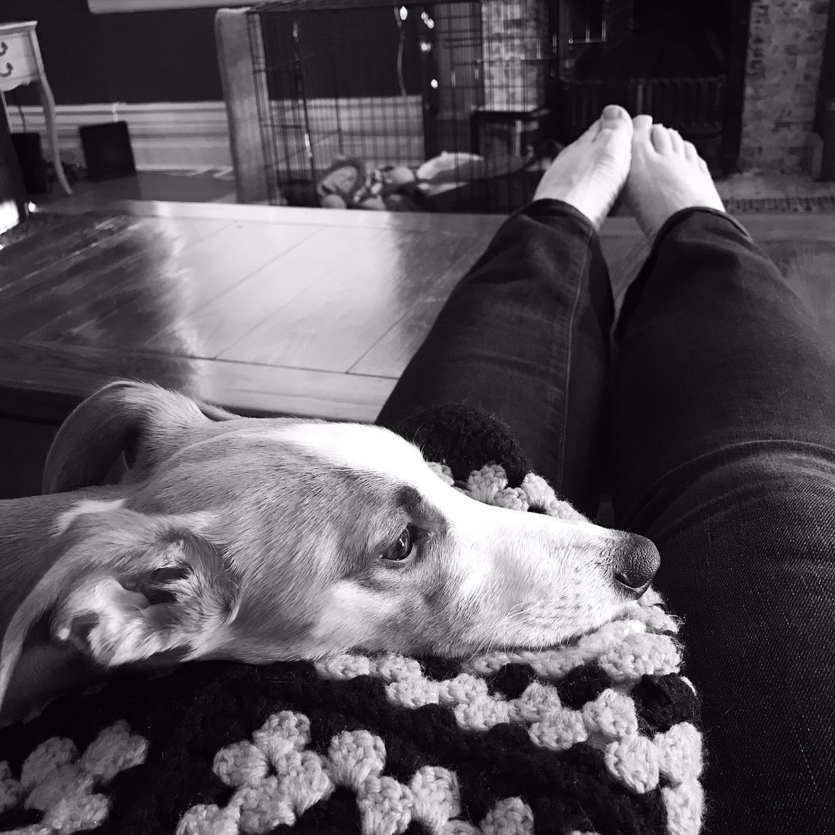 When I get home, she is my most beautiful and relaxing presence. The evenings are too short, but the sunshine is warm and glowing. #missbliss #blissful #dogdays #sunnyevenings #shesmybestie #dogs #DogsofTwittterpic.twitter.com/YnJjgCdiy0