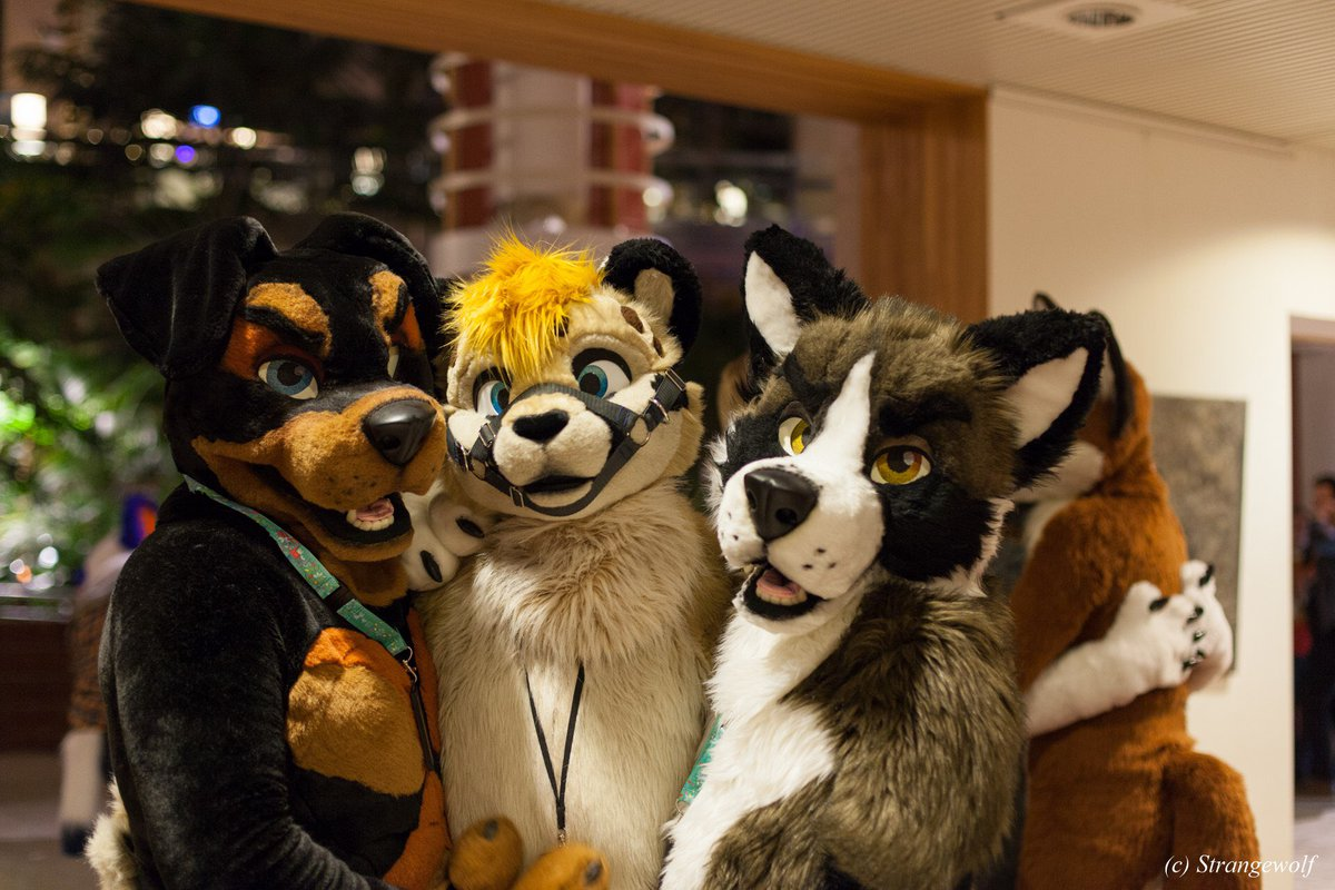 Good times at @NordicFuzzCon with @DucatiDaRottie and @littlecheetah_    I guess dogs are able to tame the cats   @Strange99wolf<br>http://pic.twitter.com/HQjPxidKvR
