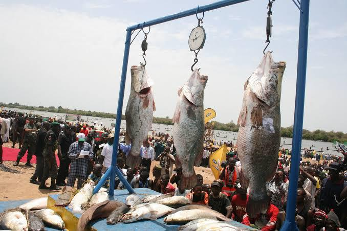 Argungu International Fishing Festival Holds After 10 Years