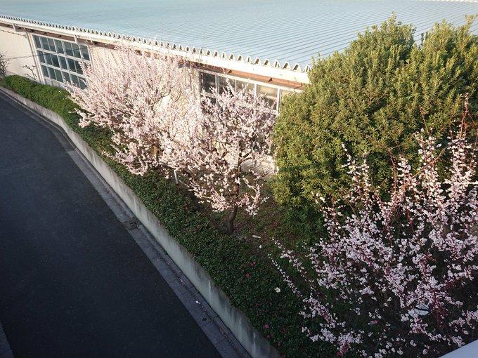 もうすぐ桜も咲きそうですね https://t.co/X78nNpGSBs