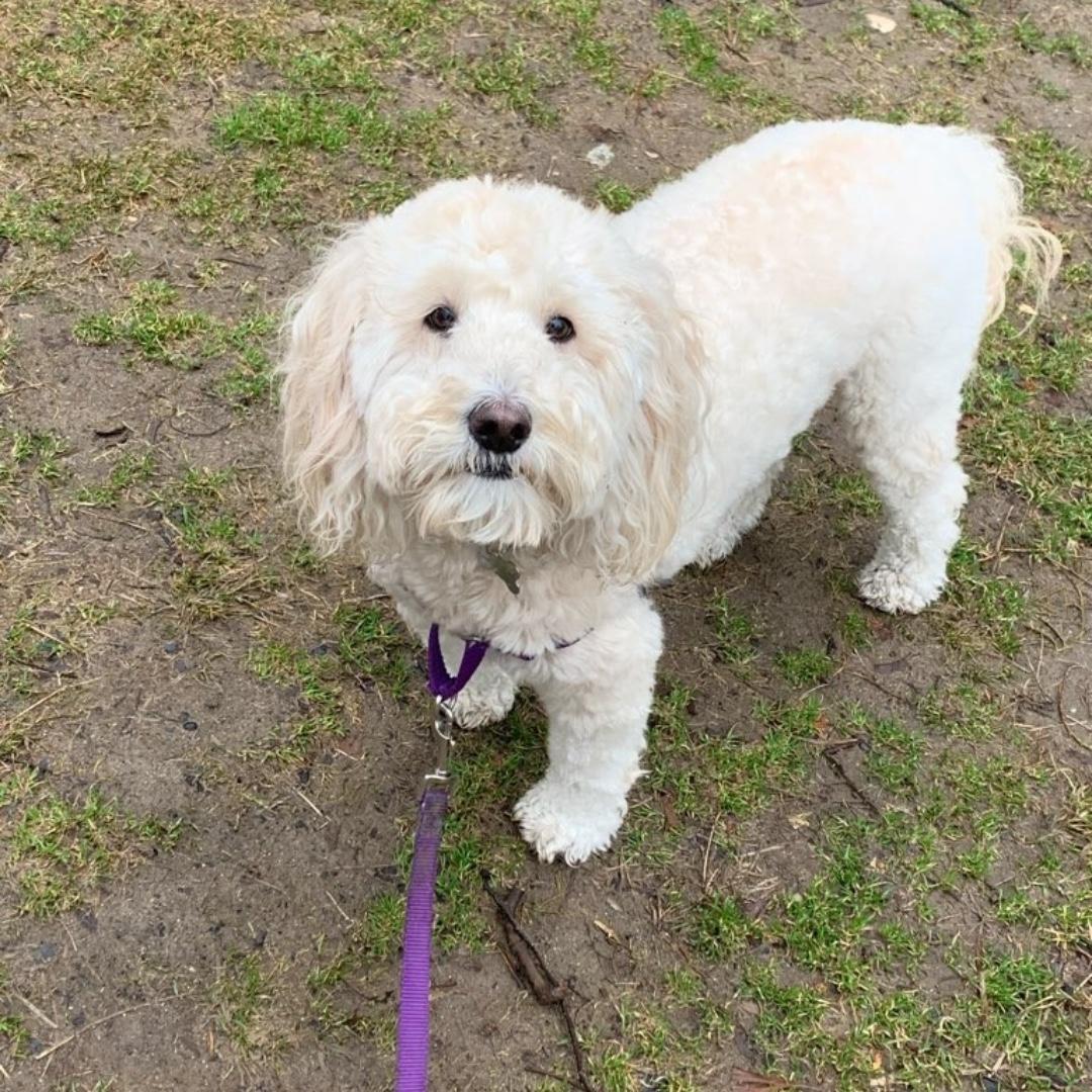 Nora wishes you a happy end of the day! #goldendoodle #maythepawsbewithyou #lukedogwalker #dogwalkeruws #happydog #uws #doggy #doggo #furbaby #dogcity  #puppy #puppylover #ilovedogs #sweet #whatabeauty #nycitydog #sweetdoggo #endoftheday #cutedog #cutepic #dogsofinstagram