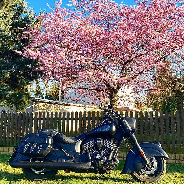 Say hello to the beautiful spring. . . Please check my fan page @indian_and_harley_addicted . . #europeanbikers #bikerofgermany #indiangermany #indianmotorcycle #darkhorserider2019 #bikerofinstagram #bikeofinstagram #instabikes #bikegram #bikeworld #bike… https://ift.tt/3dqvSJfpic.twitter.com/wULaYw2KWF