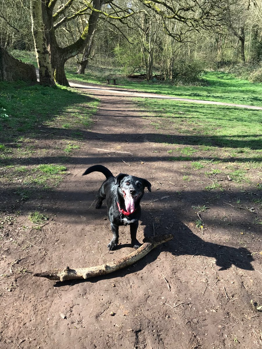 Sonny loving a stick in the sunshine on his daily walk!