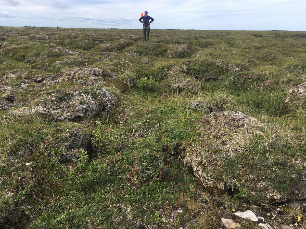 For any grad students/postdocs/others. If you are working on PERMAFROST, sub-arctic vegetation dynamics, or fire mapping/dynamics in sub-arctic ecosystems. Give me a shout, we some cool data from along the Hudson Bay coast (1998-present). #CollaborationTime @usask @agbiousaskpic.twitter.com/mufBRcI0kl