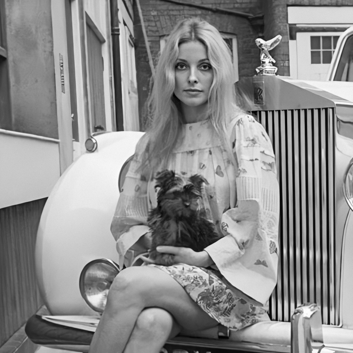 #SharonTate photographed in July, 1969 by #TerryONeill with Prudence, her #YorkshireTerrier puppy, and #RollsRoyce.  Dress was designed by #GlenofMichigan.pic.twitter.com/hxYMJBXCWI