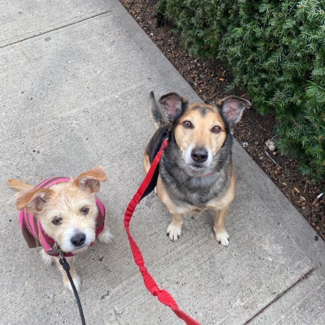 Molly & Elvis wish you a happy end of the day! #mixedbreed #maythepawsbewithyou #lukedogwalker #dogwalkeruws #happydog #uws #doggy #doggo #furbaby #dogcity  #puppy #puppylover #ilovedogs #sweet #whatabeauty #nycitydog #sweetdoggo #endoftheday #cutedog #cutepic #dogsofinstagram