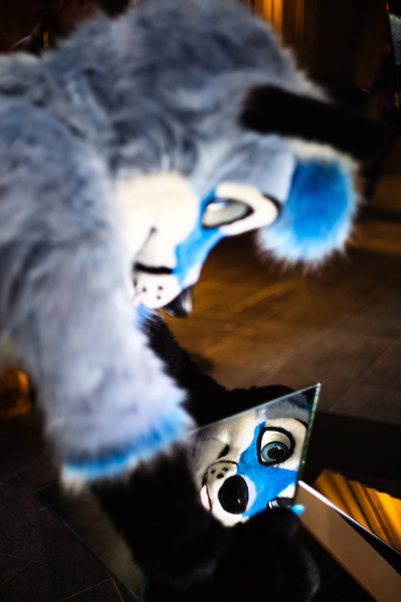 Öhmm what are you doing.... behind... me?   Ahhh it's only @SquashTFC taking a cute picture!  What would you guys do behind this handsome foxxo? :3 #NFC2020 <br>http://pic.twitter.com/AOsdFv3DOf