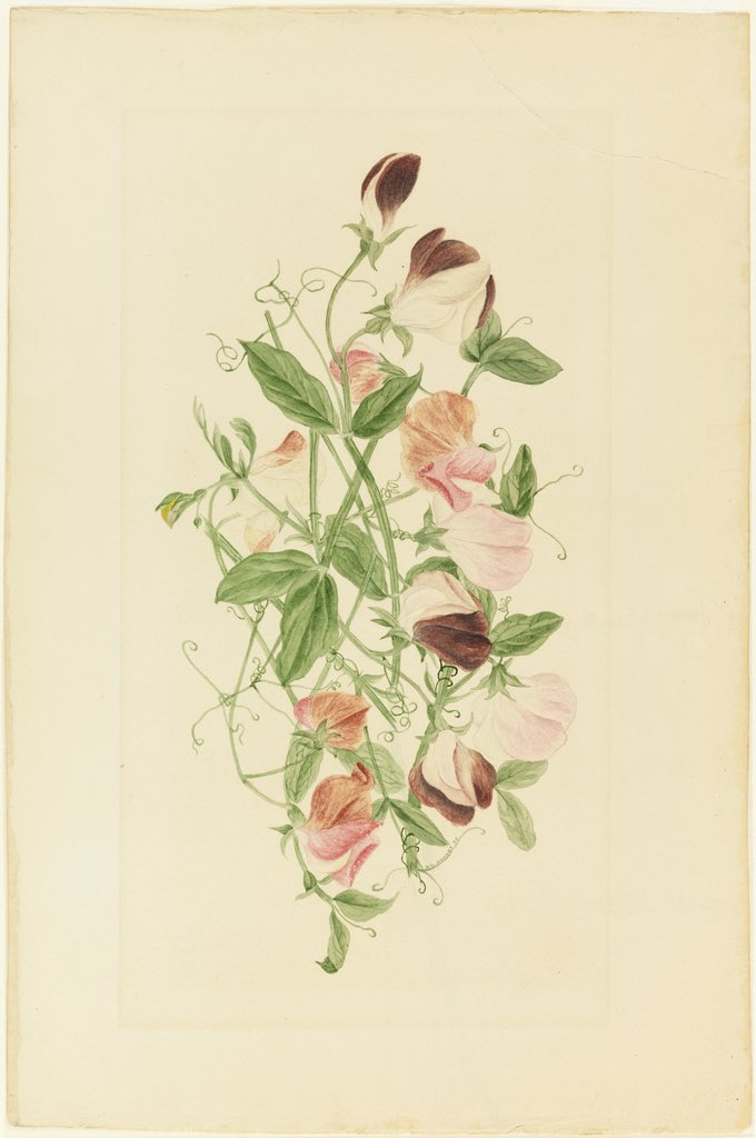 Illustration of pink flowers on a green vine