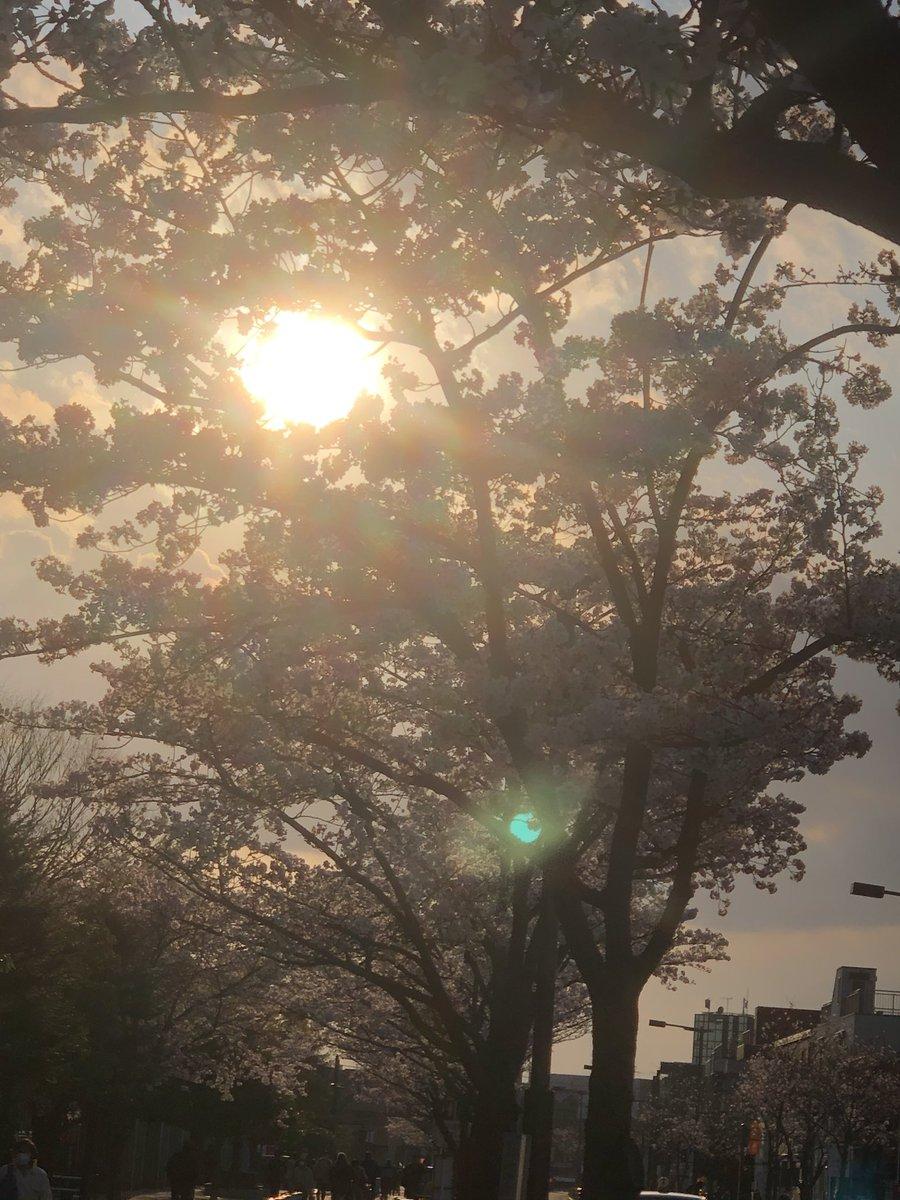 #桜 #cherryblossom  #夕日 #sunset  #写真 #風景  #風景写真 #photography  #japanphoto pic.twitter.com/SKBTBLlf7f