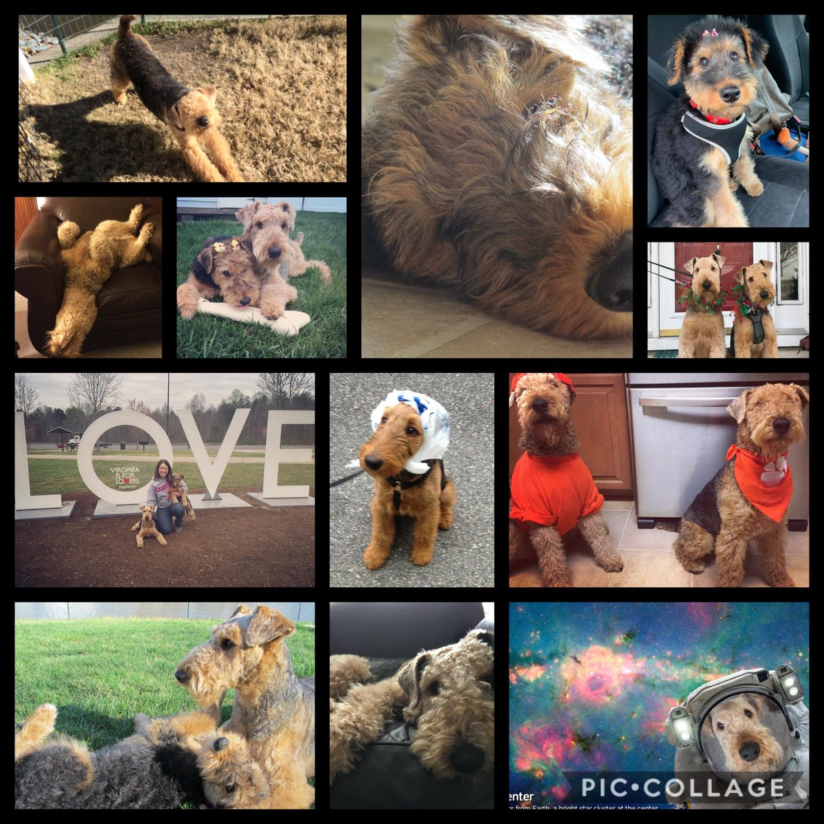 Here are my LOVES! Day 2 of Virtual Spirit Week: Pet Day. #Silas #Phoebe #Terriers #KHSlive 💛🖤