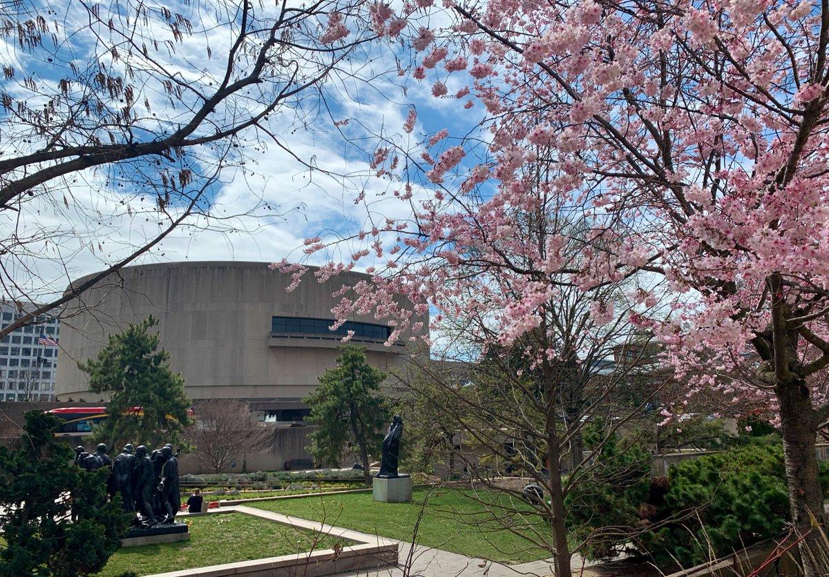 Blooming cherry tree in a sculpture garden