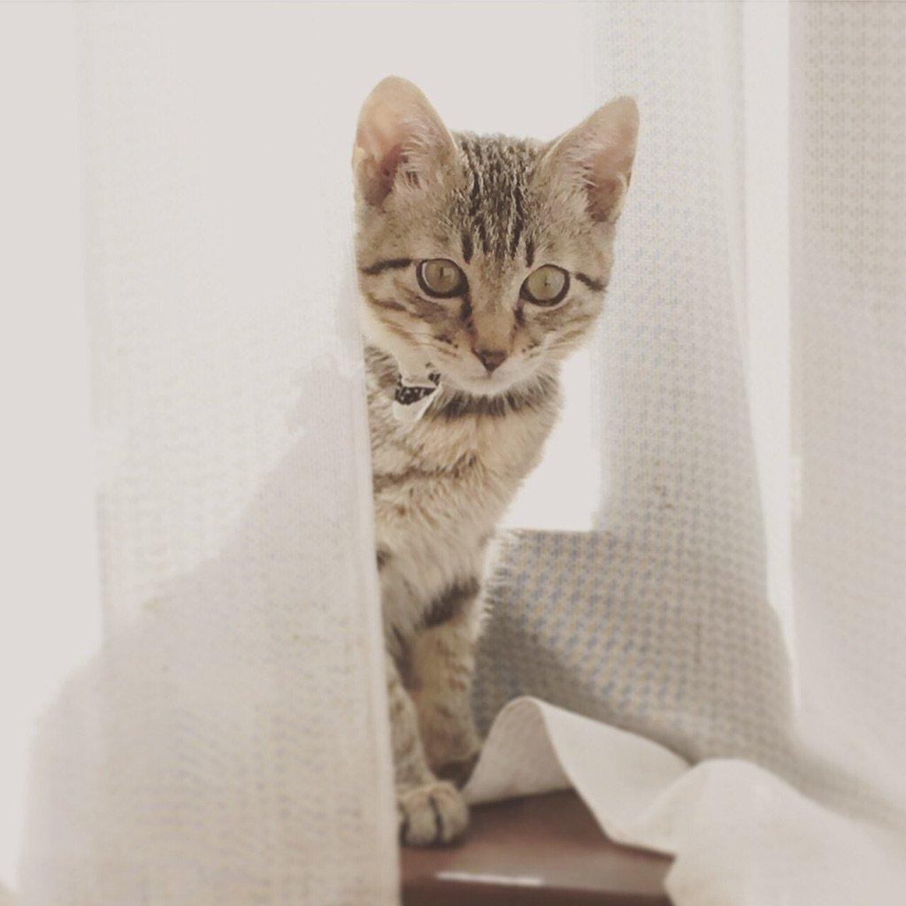 ネコのヒゲは出世のラッキーアイテム。 出世のお守りとされるのは「一条天皇がネコに爵位を与えた」という故事が由来とされています。 #ネコのヒゲ #出世 #ラッキーアイテム #猫 #トリミング #トリミングサロン #ペットホテル #ペットサロン #グルーミング #泡パック #一時預かり #猫シャンプーpic.twitter.com/rnXiedStwH